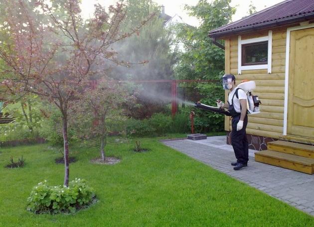 Проще упредить, чем потом лечить: как не допустить появления вредителей в саду