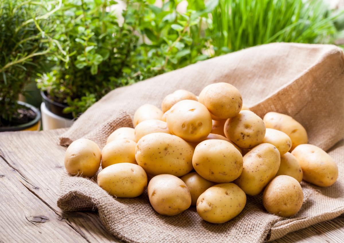 Картофель: почему поменялся вкус