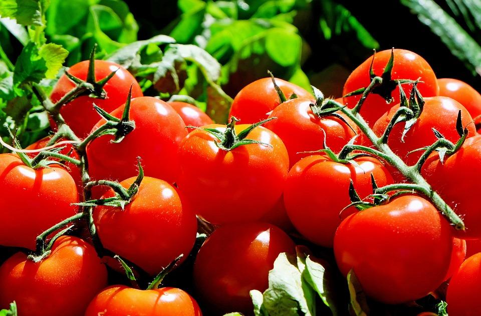 Питерские томаты не хуже южных