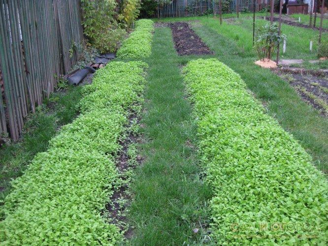 После урожая почве требуется новая шубка