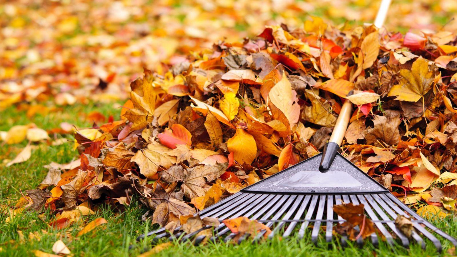 Убирать ли опавшую листву?
