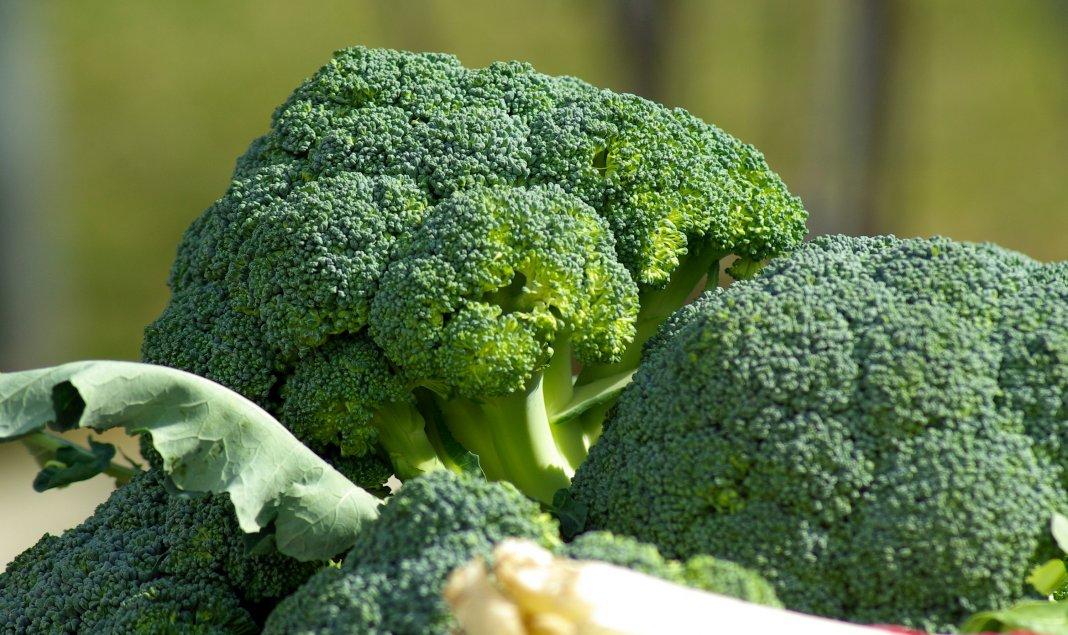 Несколько советов как получить большой урожай брокколи