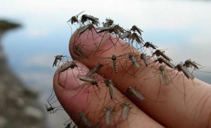Как стать «невкусными» для комаров и клещей
