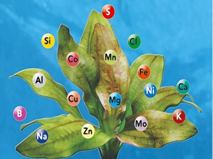 Как узнать, каких микроэлементов не хватает растениям?