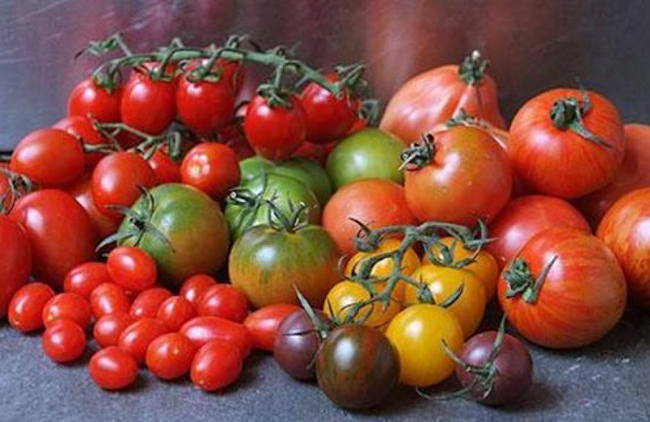 Гибриды томатов: они стали вкуснее!
