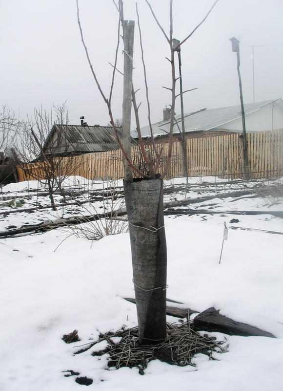 Тест: выдержали ли фруктовые деревья морозы?
