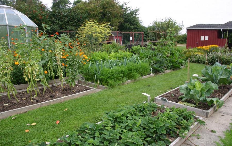 Огород в разгар лета: главное не прозевать урожай