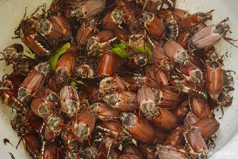Жуков больше, чем червей