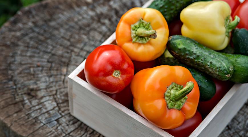 Жаровыносливые сорта овощей