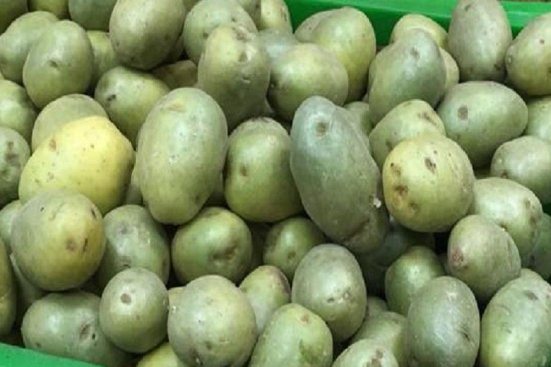 Почему картофель не дает ростки?