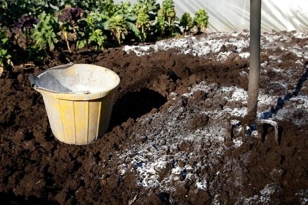 Как «вылечить» кислую почву