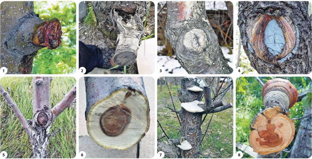 Губит деревья не климат, губит деревья пила