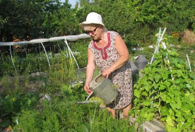 Июльские заботы в саду и огороде