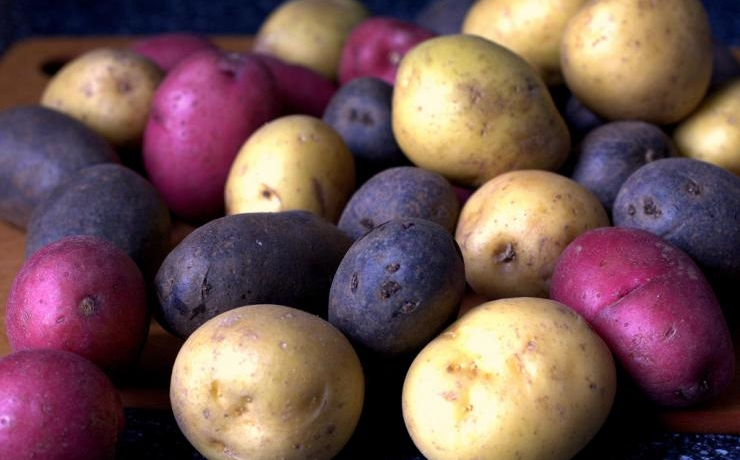 Синий, красный, полосатый... Разноцветные сорта картофеля