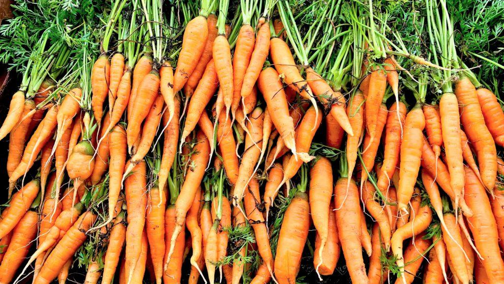 Основные правила выращивания моркови