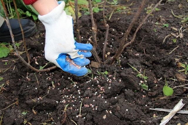 Чем лучше подкормить садовые культуры в начале вегетации