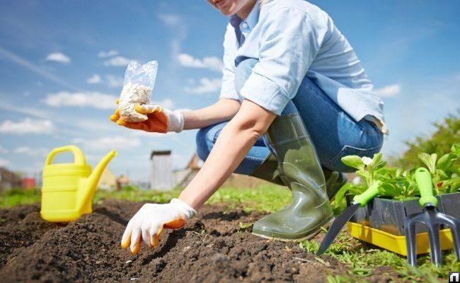 Май - фундамент для будущего урожая