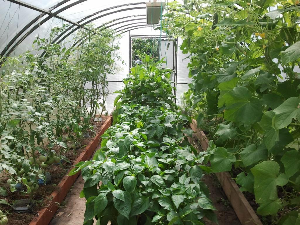 Как разместить растения в теплице
