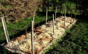 Какие садовые растения рады мульчированию свежими опилками