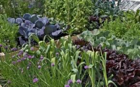 Севооборот на огороде - гарантия здорового урожая
