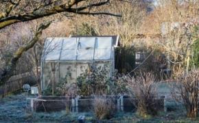 Что надо успеть сделать в саду в ноябре