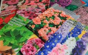 Как посеять цветы под зиму