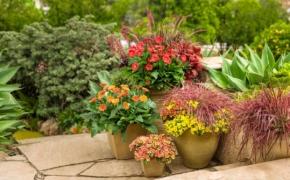 Растения в вазонах на участке: мобильные цветники