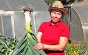 Делюсь опытом выращивания лука-порея
