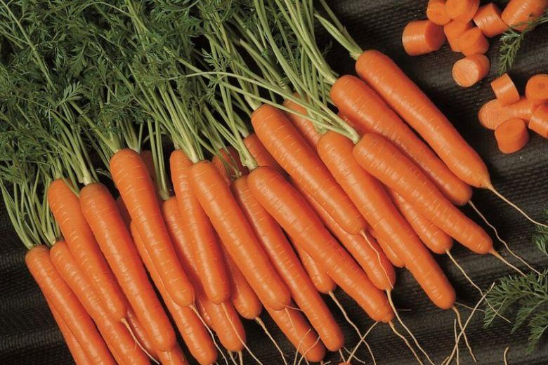 3 главных правила ухода за морковью
