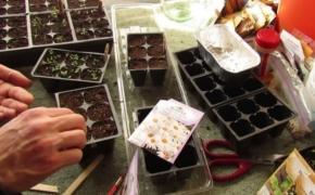 Календарь посева цветов на рассаду