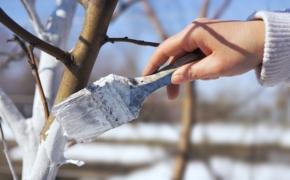 Защита деревьев и кустарников в оттепель