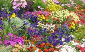 Какие цветы нельзя сажать рядом