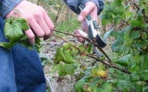 Осенняя обрезка в саду