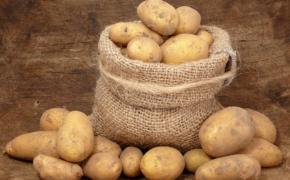 Озимый картофель
