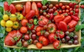 Побольше томатов, вкусных и разных