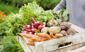 17 способов сохранить урожай овощей