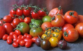 Самые неприхотливые сорта помидоров