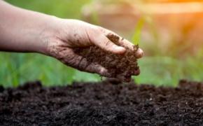 Улучшение плодородия почвы в закрытых конструкциях после сбора урожая