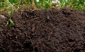 О создании почвенного плодородия