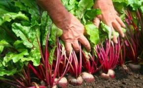 Топ-10 самых лучших и выгодных растений на садово-огородном участке