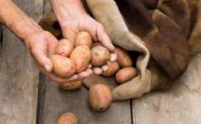 Основные ошибки при хранении картофеля
