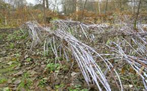Подготовка малины к зиме