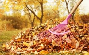 Убирать ли опавшие листья перед зимой