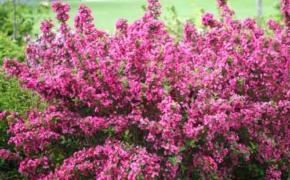 Растения, подходящие для влажных мест