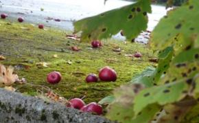 Октябрьские работы в огороде и саду
