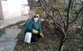 Как защитить плодовые деревья от зимующих вредителей