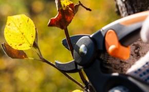 Осенняя обрезка садовых деревьев и кустарников