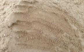 Какой песок является лучшим для сада и огорода?