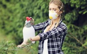 Убойное средство против огородной нечисти
