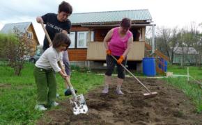 5 важных дел в саду и огороде на майские праздники